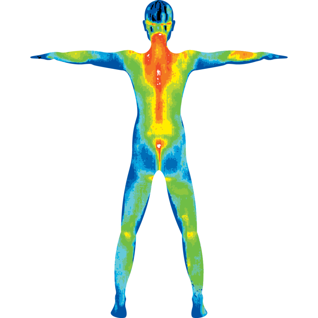Male body in digital infrared thermal imaging